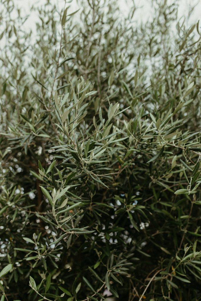 UTOPICLOVERS20200702 – EDITO Jérémie Sésanne Lajarveniere 8711 683x1024 - Un mariage élégant et végétal dans le Beaujolais